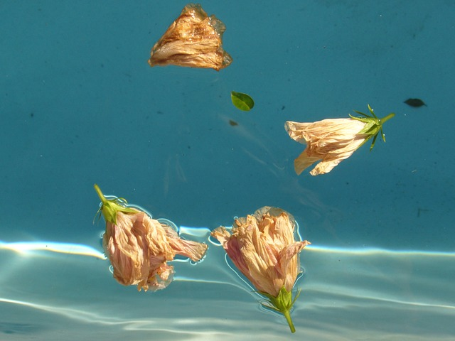 zvadlé květy na hladině